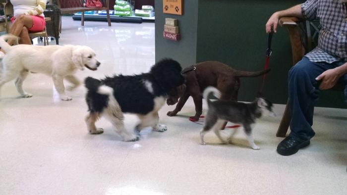 Puppy Class 4 1
