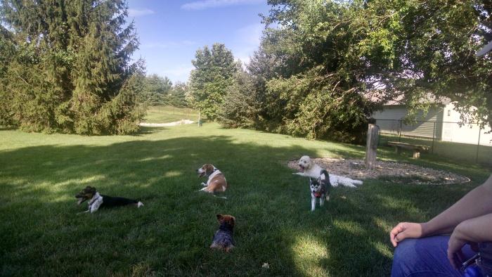 July 14 Beverlys Bark Park.jpg