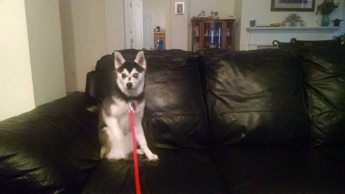6-mo-sit-couch